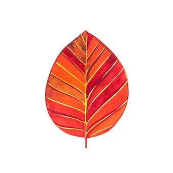 Herbstblatt - buche. herbstahornblatt isoliert. aquarellillustration.