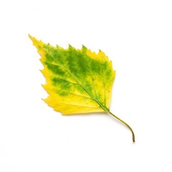 Herbstblatt getrennt auf weißem hintergrund