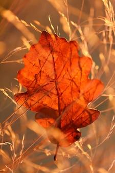 Herbstblatt im feld gras im hellen sonnenlicht im morgengrauen.