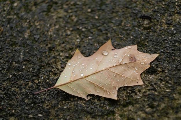 Herbstblatt mit regentropfen liegt auf dem asphalt
