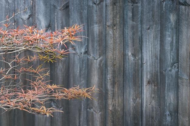 Herbstblatt und -anlage auf dunklem farbscheunenholz