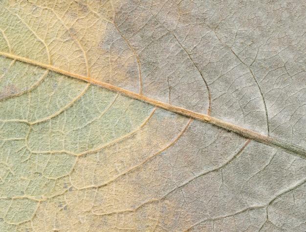 Herbstblattbeschaffenheit