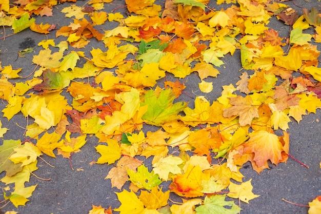 Herbstblattfall gefallene blätter im regenkonzept herbst kommt in die stadt blätter auf der straße