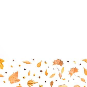 Herbstbodenrahmen von blättern und von samen