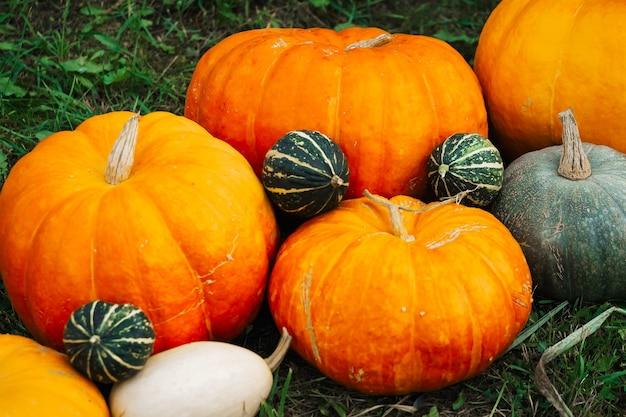 Herbstdekor. kürbisse, kürbis, kürbisse auf dem hintergrund des herbstgrases
