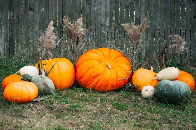Herbstdekor. kürbisse und kürbis am grauen holzzaun