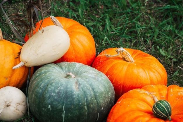 Herbstdekor. natürliche kürbisse, kürbis, kürbisse auf dem hintergrund des herbstgrases