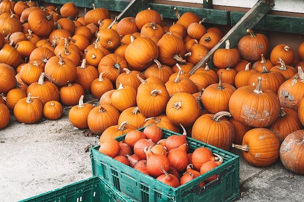Herbsternte von kürbissen haufen von orangefarbenen kürbissen auf dem bauernmarkt oder saisonalem festival