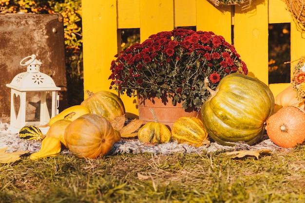 Herbsterntefest - korb mit herbstfrüchten, altem koffer, kürbissen und bunten herbstblumen. landschaftsgestaltung im landhausstil für die herbstsaison.