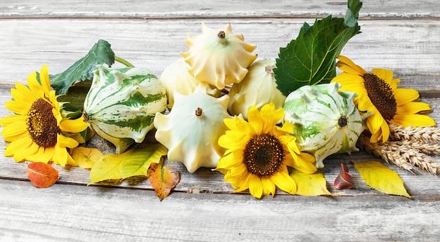 Herbsterntegemüse