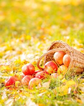 Herbstfrüchte im freien. korb mit roten äpfeln. thanksgiving-feiertagskonzept