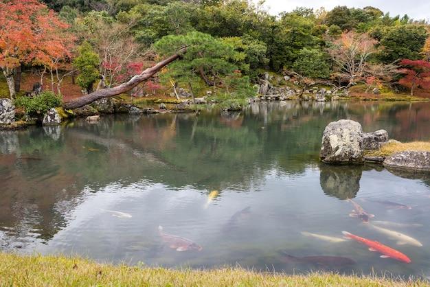 Herbstgarten bei tenryu-ji, arashiyama