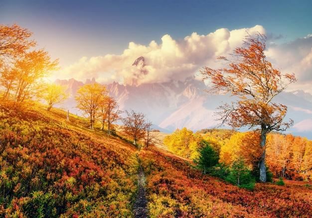 Herbstgasse. fantastische cumuluswolken, dramatischer himmel. sonnenuntergang.