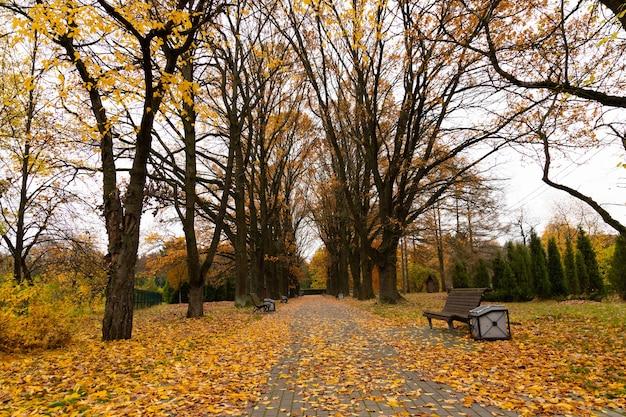 Herbstgasse im park mit bänken und gefallenen gelben blättern.