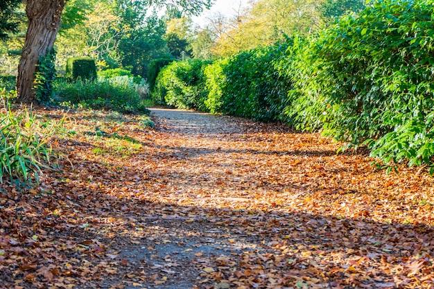 Herbstgasse mit gefallenem herbstlaub. einsame gasse mit gefallenem herbstlaub. bunter herbstpark.