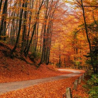Herbstgasse. schönheitswelt karpaten ukraine europa