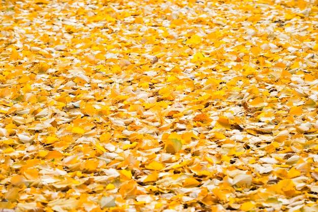 Herbstgelb gefallene blätter als naturhintergrund