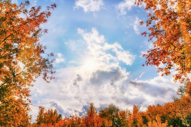 Herbstgelbe blätter in sonnenstrahlen und blauem himmel mit den wolken