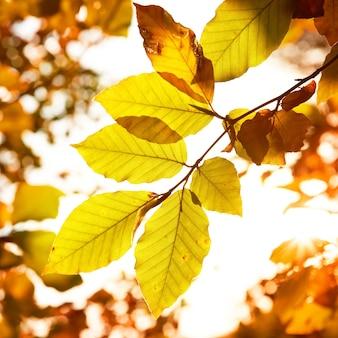 Herbstgelbe blätter schließen detail