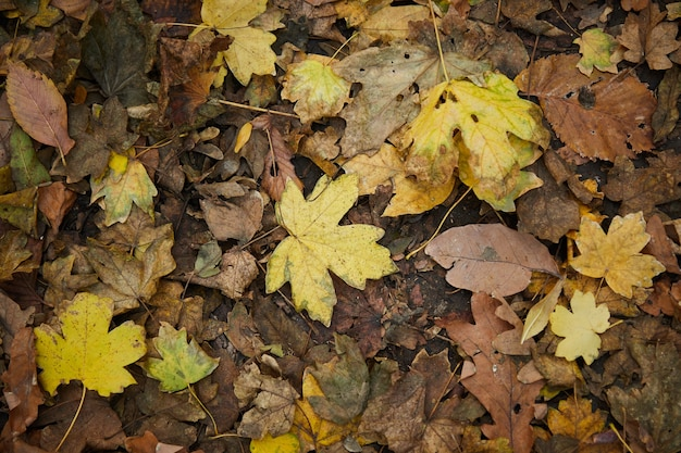 Herbstgelbe und braune trockene blätter auf dem boden, draufsicht