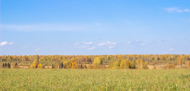 Herbstgelber wald und feld. blauer himmel mit wolken über dem wald. die schönheit der natur im herbst.