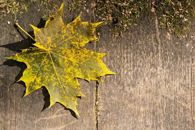 Herbstgelbes ahornblatt auf alten verwitterten holzbrettern. designhintergrund mit kopierraum.