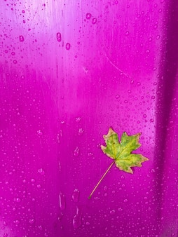 Herbstgelbgrün allein ahornblatt auf lila plastikhintergrund nach regen mit regentropfen