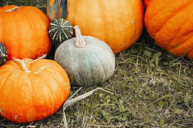 Herbstgemüse der saison: kürbisse und kürbisse liegen im gras