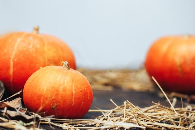 Herbsthalloween-kürbise auf hölzernem hintergrund und henne