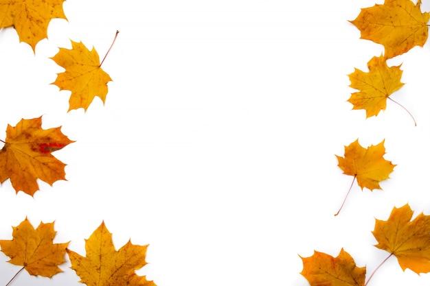 Herbsthintergrund. blätter. ahornblätter auf weißem hintergrund. flache lage, draufsicht. kopieren sie platz für saisonale aktionen und rabatte.