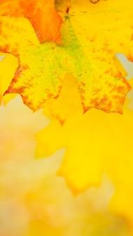 Herbsthintergrund mit ahornblättern.
