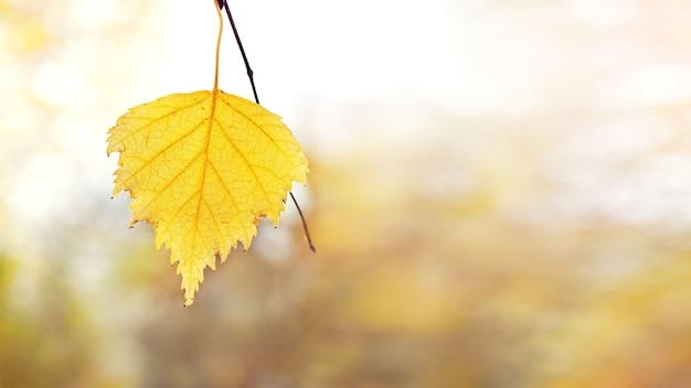 Herbsthintergrund mit einem gelben birkenblatt auf unscharfem hintergrund, kopierraum