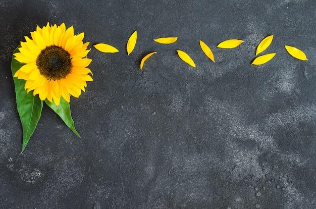 Herbsthintergrund mit einer gelben sonnenblume und den blumenblättern auf dunklem beton.