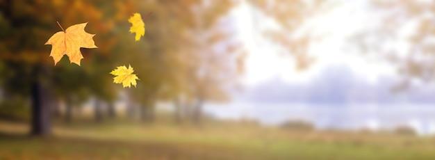 Herbsthintergrund mit fallenden ahornblättern im wald auf unscharfem hintergrund bei sonnigem wetter, panorama