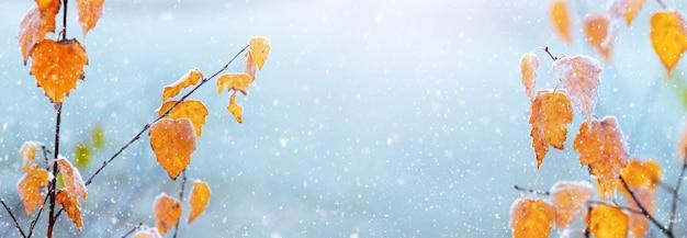 Herbsthintergrund mit gelben birkenblättern auf ästen während des schneefalls. gelbe birkenblätter auf einem unscharfen winterhintergrund