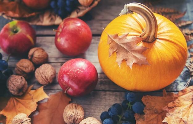 Herbsthintergrund mit kürbis. erntedank. tiefenschärfe.