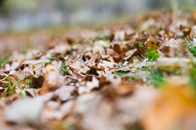 Herbsthintergrund mit trockenem baumlaub, braunen und grünen farben und bokeh, herbstsaisonmuster