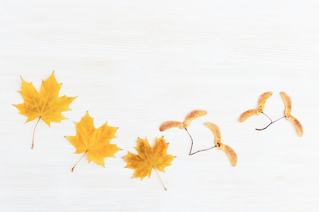 Herbsthintergrund, weißes holz mit trockenen gelben herbstjahresblättern des ahornbaums und der samen.