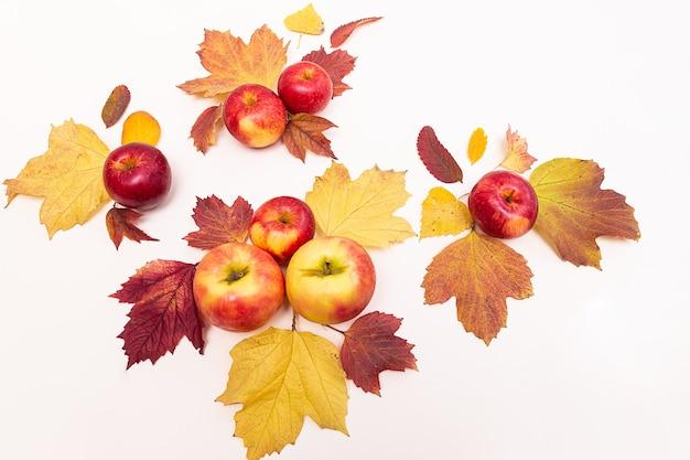 Herbstkomposition äpfel und farbige laubblätter. erntekonzept