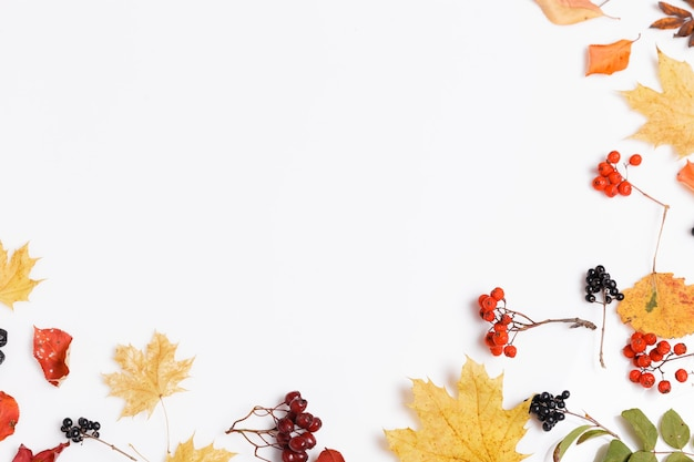 Herbstkomposition aus herbstlichen, mehrfarbigen blättern und beeren von aronia, vogelbeere, weißdorn auf weißem hintergrund. herbst, herbstkonzept. flache lage, ansicht von oben, kopienraum