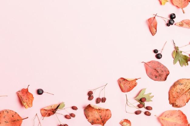 Herbstkomposition aus herbstlichen, mehrfarbigen blättern und beeren von aronia, weißdorn auf rosafarbenem hintergrund. herbst, herbstkonzept. flache lage, ansicht von oben, kopienraum