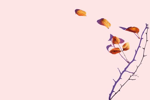 Herbstkomposition. isolierte trockene blätter auf einem pastellrosa hintergrund. speicherplatz kopieren