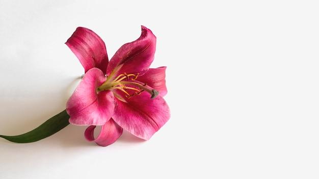 Herbstkomposition mit roter lilienblume auf weißem hintergrund. platz für flach liegende kopien.