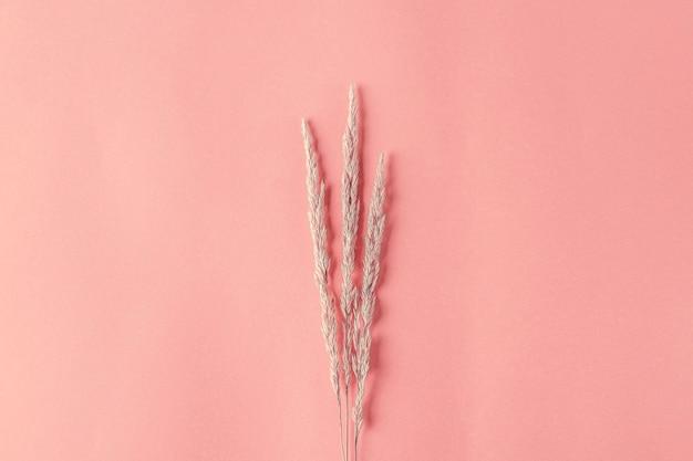 Herbstkomposition mit trockenen pampasgrasschilf auf orangem hintergrund. minimale, stilvolle, kreative flache lage, platz für text kopieren