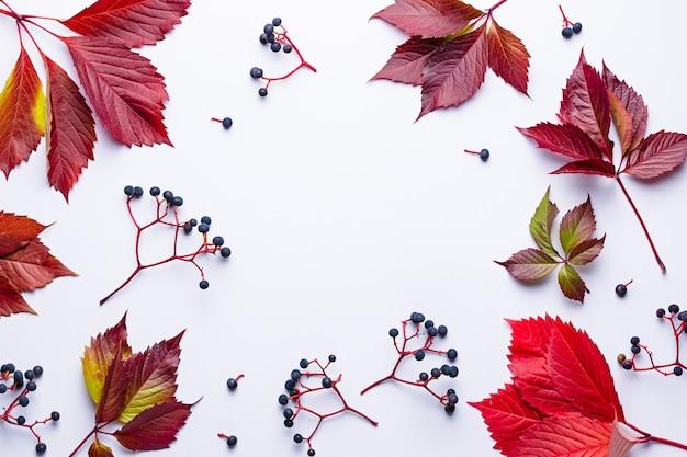 Herbstkomposition mit wilder traube und roten blättern auf hellgrau