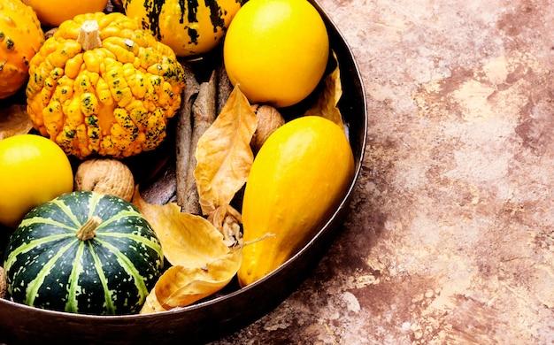Herbstkürbis im tablett
