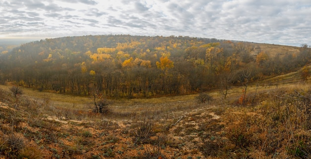 Herbstlandschaft. blick auf den wald mit gelbem laub vor dem hintergrund eines bewölkten himmels.