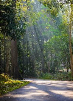 Herbstlandschaft des ländlichen weges im laubwald