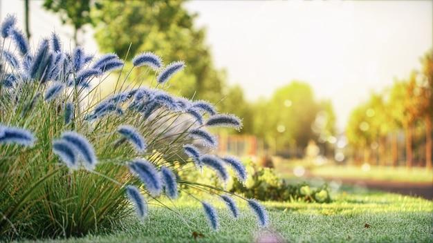 Herbstlandschaft. die pflanzen sind mit raureif und eis bedeckt.