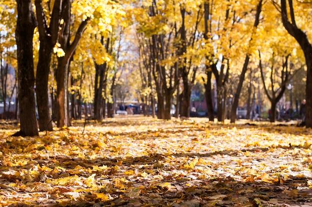 Herbstlandschaft ein teppich aus gelbem, braunem, orange getrocknetem laub unter der herbstsonne